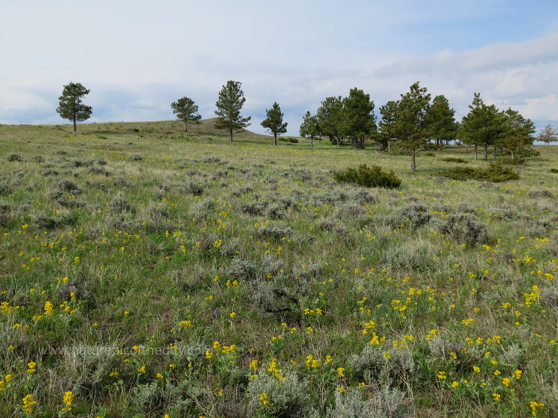 Prairie, flowers and trees in Montana