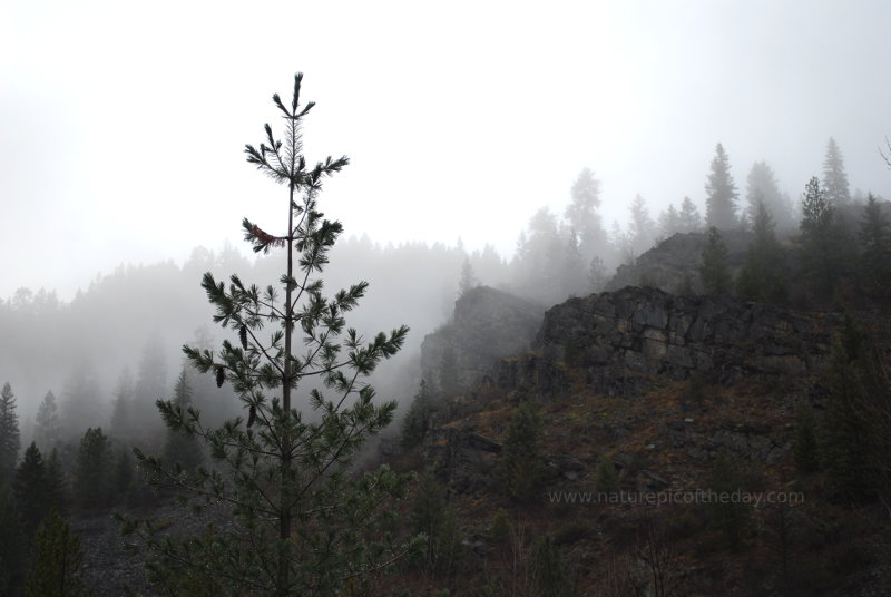 Misty fog in the Rocky Mountains