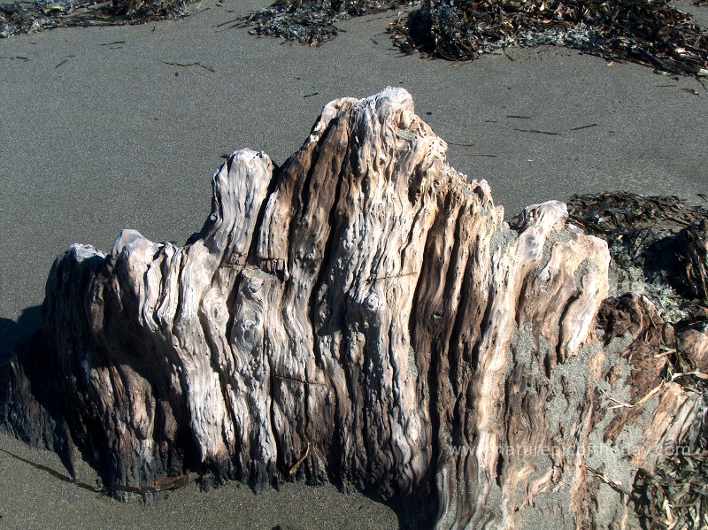 Driftwood in Northern California