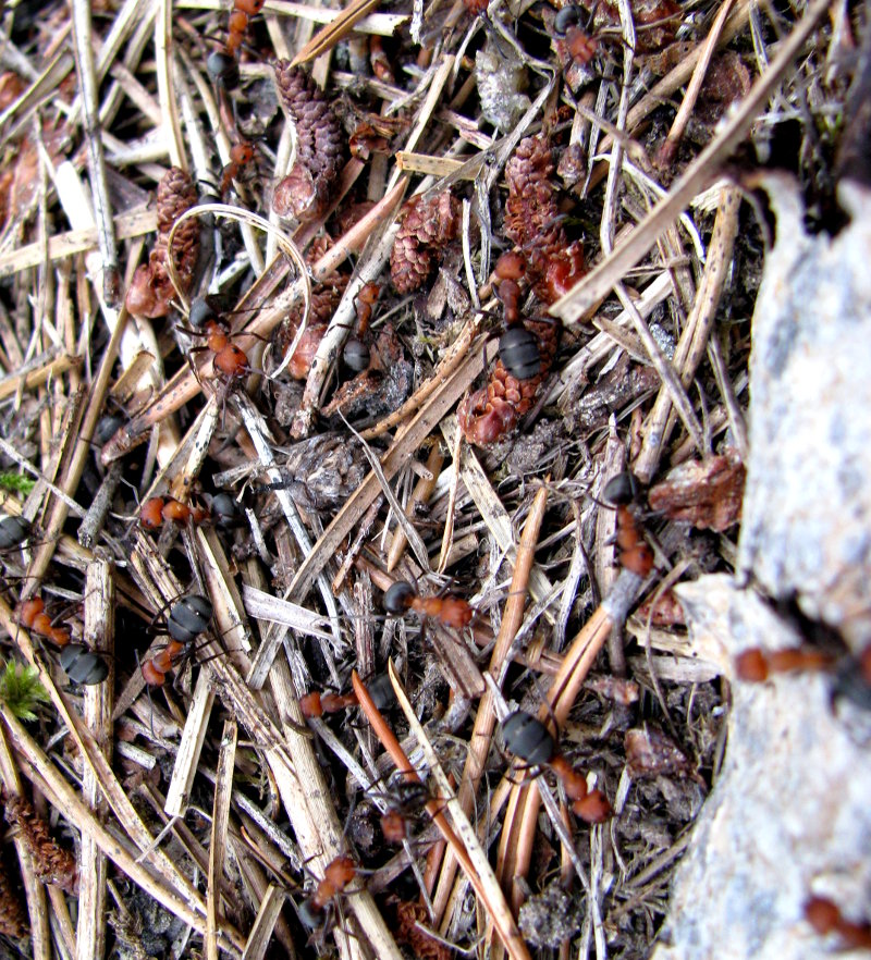 Ants in a mound