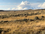 Antelope in Wyoming
