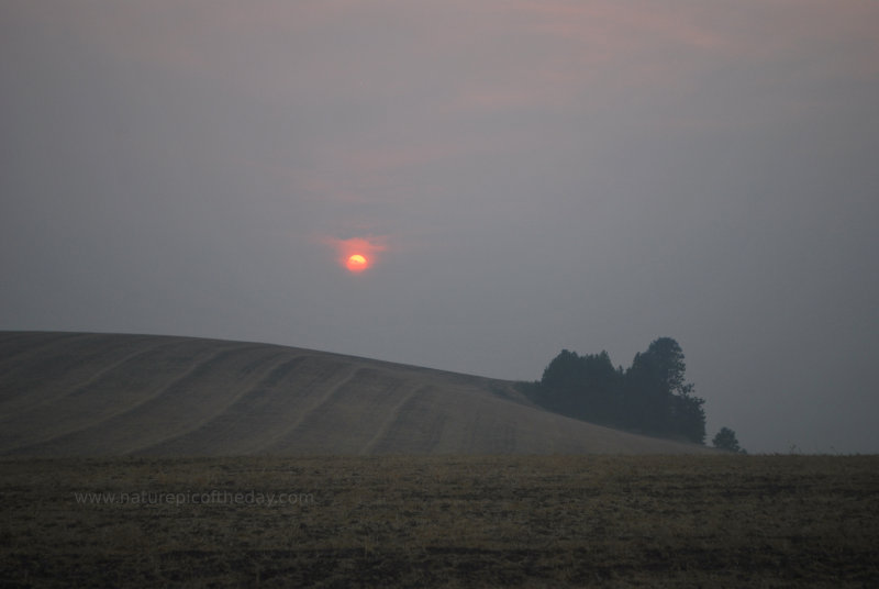 Sun through smoke in the summer.