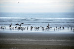 Birds on the beach in Washington State