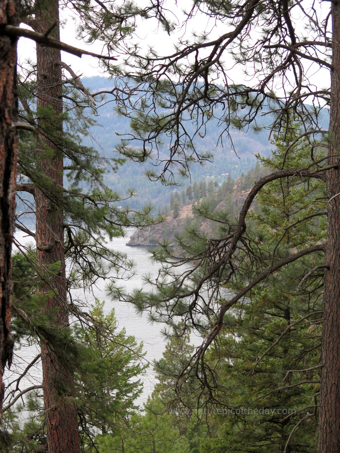 Ponderosa Pines and Lake Pend Orielle
