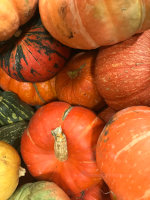 Pumpkins and other gourds