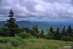 Landscape photography.  Roan Mountain in Tennessee.