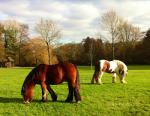 Horses in a park.