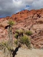 Red Rock Canyon in Nevada not far from Las Vegas