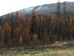 Wildfire results