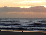 Seagulls, ocean waves, sunrise in New Jersey