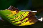 Beautiful light plays on leaf