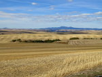 Wheat country in the Palouse